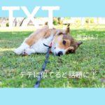 TXTヨンジュンの彼女は?テテに似てると話題に!の文字が入ったコーギー犬の画像